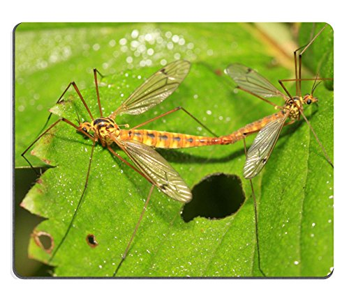 luxlady-gaming-mousepad-bild-id-30020453-mucken-insekten-paarung-auf-grun-leaf-in-the-wild