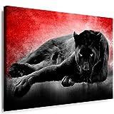 Julia-Art - Bilder Panther Leinwand mit Keilrahmen 100 x 70 cm Leinwandbild XXL Wandbild Tiere Kunstdrucke Tierwelten Bild Wanddesign Wanddekoration c-642v-208
