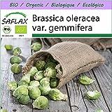 SAFLAX - BIO - Rosenkohl - Groninger - 30 Samen - Brassica oleracea var. gemmifera