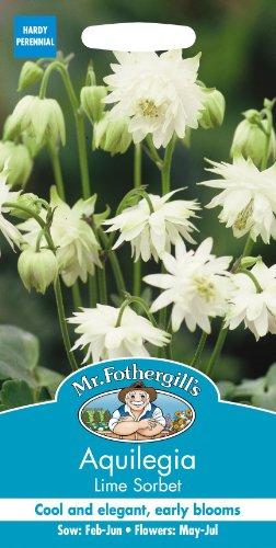 Unbeheizte Schale (Mr Fothergills Pilzsporen, Blume Akelei Lime Sorbet 25 Samen)