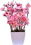 #9: Pink Cherry Blossom (32 cm) Plant
