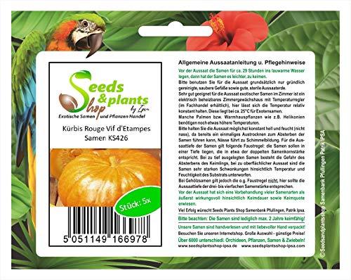 Stk - 5x Kürbis Rouge Vif d'Etampes - Kürbis Samen Gemüse Garten Pflanze KS426 - Seeds Plants Shop Samenbank Pfullingen Patrik Ipsa
