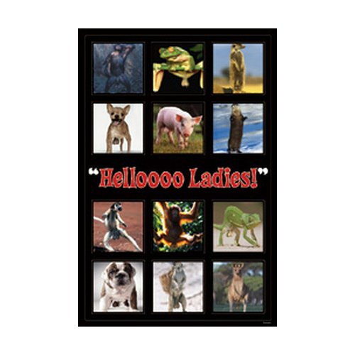Animals - Poster Hello Ladies - Collage (Trinken Lady)