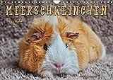 Meerschweinchen - so süß (Wandkalender 2018 DIN A4 quer): Eindrucksvolle Bilder der niedlichen Nager. (Monatskalender, 14 Seiten ) (CALVENDO Tiere) [Kalender] [Jul 04, 2017] Roder, Peter