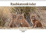 Raubkatzenkinder (Wandkalender 2020 DIN A3 quer): Bezaubernde Bilder von kleinen Raubkatzenbabies (Monatskalender, 14 Seiten ) (CALVENDO Tiere)