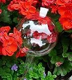 8 Durstkugeln Bewässerungskugeln mit Silikonstopfen 8 cm Durstkugel Pflanzensitter DKMS