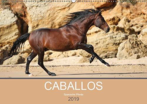 Caballos Spanische Pferde 2019 (Wandkalender 2019 DIN A2 quer): Begeben Sie sich auf eine kleine Reise und entdecken Sie die faszinierenden Pferde in ... (Monatskalender, 14 Seiten ) (CALVENDO Tiere)