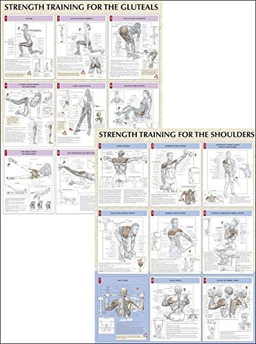 Strength Training Anatomy Poster Series by Frederic Delavier (2005-03-31)