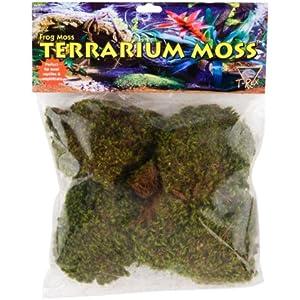 T-Rex–Schaumstoff Natürliche Spanish Moss
