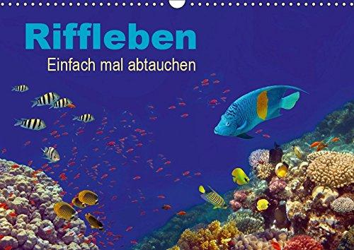 Riffleben - Einfach mal abtauchen (Wandkalender 2019 DIN A3 quer): Eintauchen in die bunte Unterwasserwelt (Monatskalender, 14 Seiten ) (CALVENDO Natur)