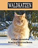 Waldkatzen: Charmante Naturburschen