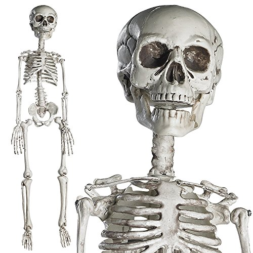 Prextex 76cm Halloween Skelett - komplettes Skelett mit beweglichen Gelenken für die beste Halloween Dekoration (Skelett Halloween Dekoration)