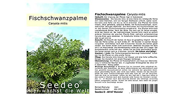 Seedeo Fischschwanzpalme Caryota Mitis 10 Samen Amazon De Kuche