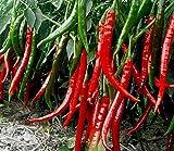 nulala 1000 pz peperoncino 'Joe's Long' Chilli Seeds hot chile pepe semi semi di ortaggi