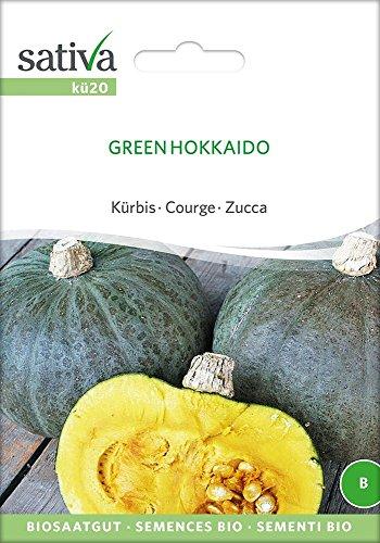 Kürbis Green Hokkaido | Bio-Kürbissamen