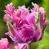 Kisshes Giardino-100 Pezzi Tulipano Bulbi Semi Colorati Semi di fiori Bulbo di fiori Tulipani bonsai Hardy perenni
