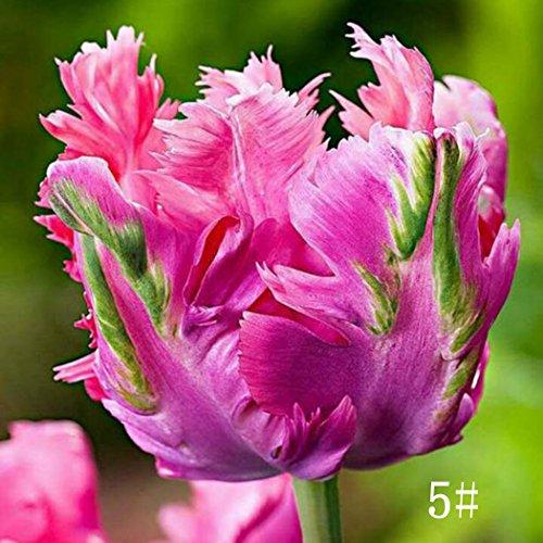 Keland Samen - 100 stück Tulpenzwiebeln Blumensamen Tulpen Ice Cream Mischung samen winterhart mehrjährig mehrfarbig (5)