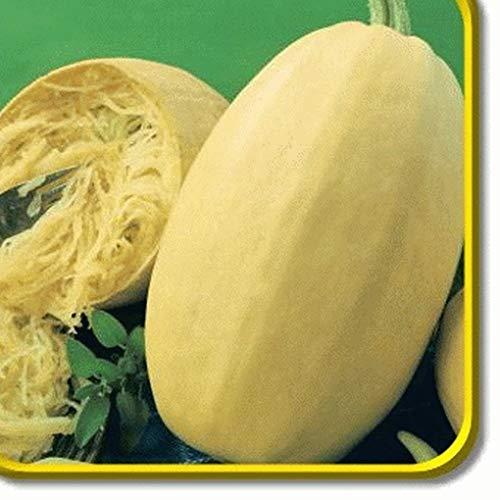 TOMHY Samen-Paket: Keim Seeds PLATFIRM-40 Vegetable Spaghetti-Winter-Kürbis-Samen