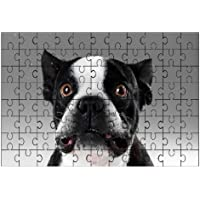 Francese Bull Dog (Bianco e nero) Cane