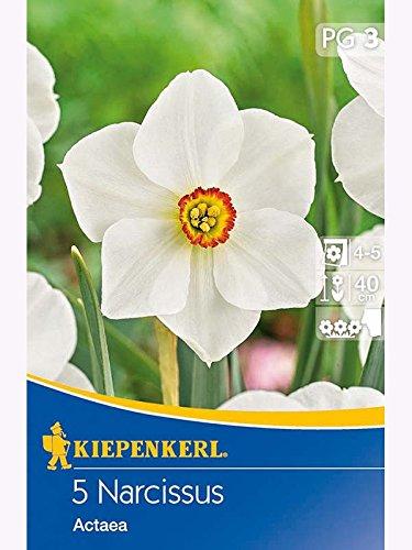 Kiepenkerl - Blumenzwiebeln 506046