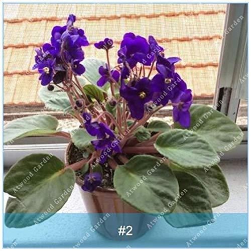 Galleria fotografica Virtue ZLKING 100 pz/pacco Fiori di Violetta cinese Bonsai Raro Piante da Balcone Giardino a crescita rapida Elevato tasso di germinazione: 2