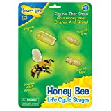 Best Show  Bee - Bee Life Cycle Toy - 4 Piece Set Review