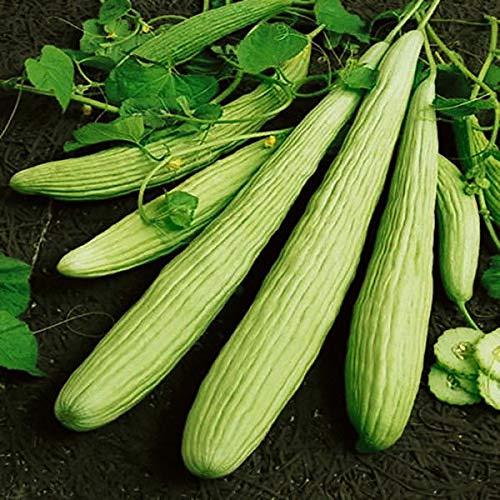 Shoopy Star Egrow 50 Pcs/Sac géant Long Green Graines de concombre Crisp doux fruits bio Veget