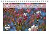 Naturmomente: Die Magnolienblüte (Tischkalender 2019 DIN A5 quer): Die Magnolie - unser schönster Frühlingsbote (Geburtstagskalender, 14 Seiten ) (CALVENDO Natur)