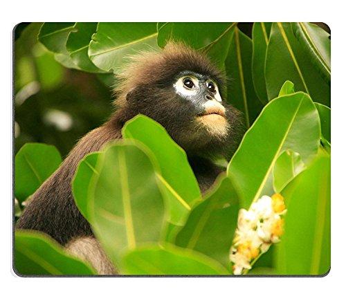 luxlady Naturkautschuk Gaming Mousepads Brillen-Langur Sitting In A Tree WUA talap Insel ANG Thong National Marine Park Thailand Bild-ID 25605376