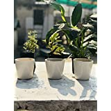 Aopt Plants Beautiful High Quality White Ceramic Cup Table Top Planter (Without Plant)