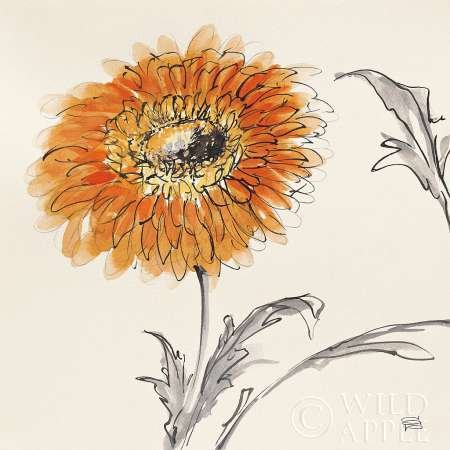 Orange Gerbera III par Paschke, CHRIS – Fine Art Print Disponible sur