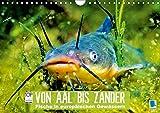Von Aal bis Zander: Fische in europäischen Gewässern (Wandkalender 2017 DIN A4 quer): Heimische Raubfische: Unter Wasser auf der Lauer Tiere [May 27, 2016] CALVENDO, k.A.