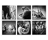 Bilder Set 6 Stk je 40x40cm Elefant Löwe Stier Nilpferd Uhu Tierwelt