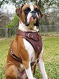Dean und Tyler The Boss Nickel Hardware Leder Hundegeschirr, braun, große–passend für Umfang Größe: 79cm bis 104cm