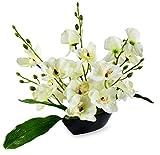 Magical Petals White Orchid Boat Arrange...