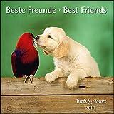 Beste Freunde Best Friends 2019 - Broschürenkalender - Wandkalender - mit herausnehmbarem Poster - Format 30 x 30 cm