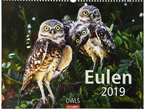 Eulen - Kalender 2019 (Mutter Natur Kalender)