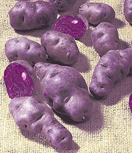 inkeme giardino - 200 pezzi di patate blu, patate bio di semi speciali di patate dolci semi di ortaggi perenni resistenti per giardino balcone/patio