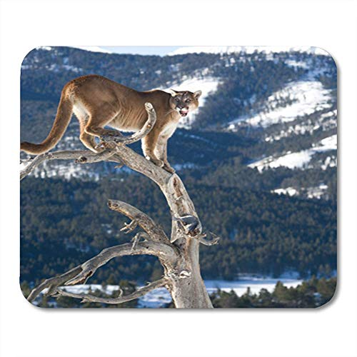 Beige Panther (AOCCK Gaming Mauspads, Gaming Mouse Pad Beige Panther Mountain Lion in Dead Tree Tan Animal 11.8