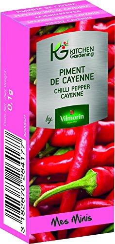 KG BY VILMORIN 8200021 Jardinières Piment de Cayenne Vert 7 x 3 x 2 cm