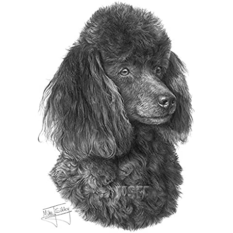 Miniature Poodle disegno stampa giclée by Mike Sibley