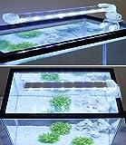 BPS Lampada per Acquario LED Illuminazione Luci per Piante sommergibile Luce Bianca e Blu 2Modelli per Scelta 4W/Potenza