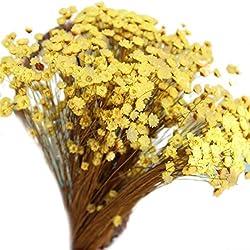 Vosarea 100 Piezas Encantadora Mini Margarita Flores secas Decorativas Flor de Estrella pequeña Floral Natural para fotografía Boda decoración del hogar (Amarillo)