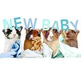 Meerschweinchen Karte - Baby Boy - Geburtskarte