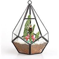 Modern Artistic Clear Hanging Air Planter Tear Diamond Glass Geometric Terrarium Small 11cm x 11cm x 13.5cm Clear Framed for Succulents Cacti Fern by NCYP - Hanging Flower Vase