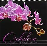 Orchideen 2019 - Blumen - Bildkalender (33 x 33) - mit Texten - Wandkalender