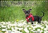 Prager Rattler (Tischkalender 2019 DIN A5 quer): Kleiner Hund mit ganz viel Herz (Monatskalender, 14 Seiten ) (CALVENDO Tiere)