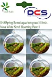 DCS (048) Spring Bonsai aquarium grass 1...