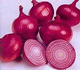 Newish Huile d'oignon rouge pour repousse des cheveux pour homme et femme Traitement...