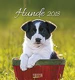 Hunde 2018: aufstellbarer Postkartenkalender